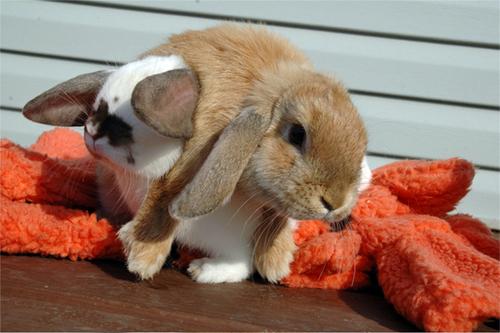 2008, 8-31 Daily Bunny