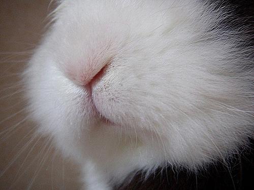 2008, 9-2 Daily Bunny.2