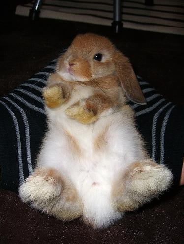 2008, 9-1 Daily Bunny