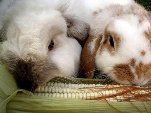 2008, 9-3 Daily Bunny.2