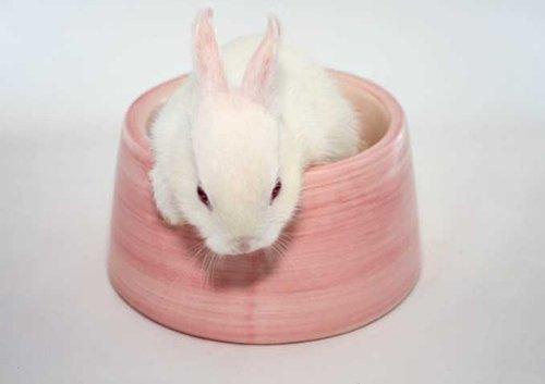 2008, 9-9 Daily Bunny.2