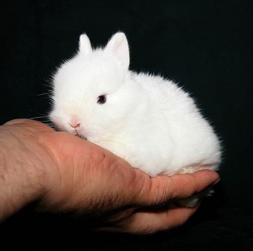 2008, 9-15 Daily Bunny.2