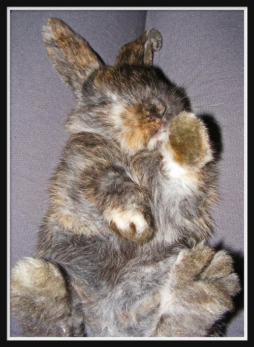 2008, 9-18 Daily Bunny
