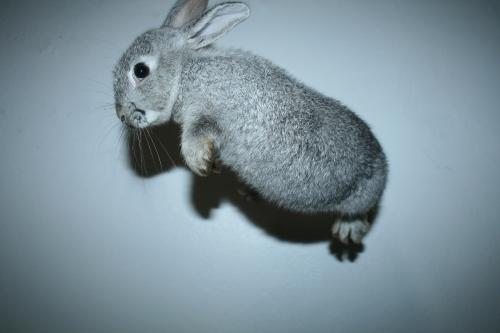 2008, 9-20 Daily Bunny