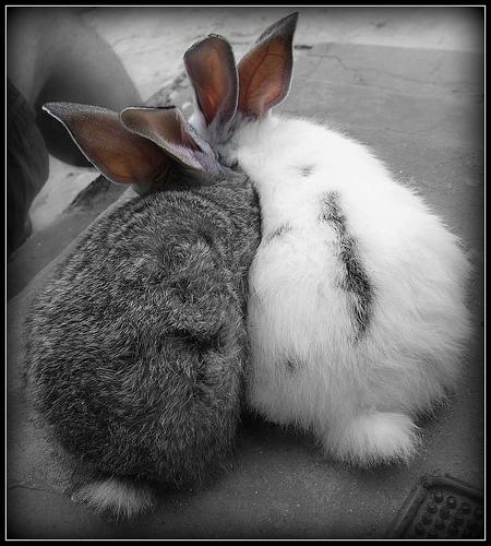 2008, 9-21 Daily Bunny