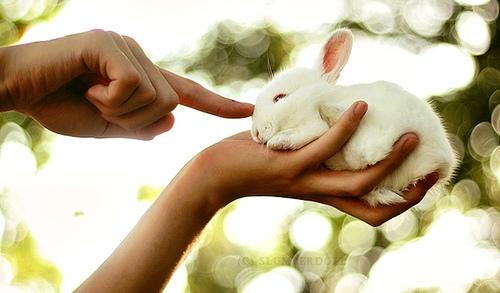 2008, 9-23 Daily Bunny