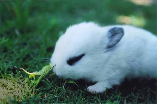 2008, 9-24 Daily Bunny