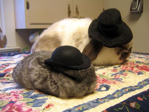 2008, 9-24 Daily Bunny.2