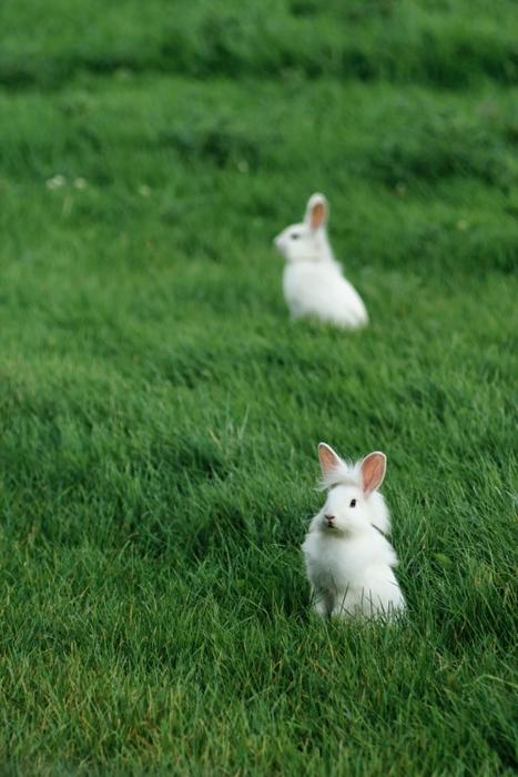 2008, 9-25 Daily Bunny