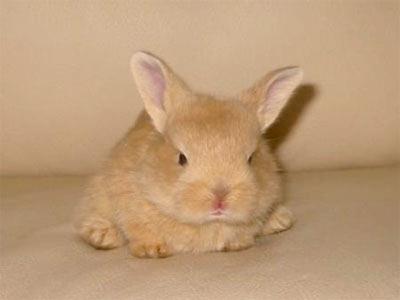 2008, 9-27 Daily Bunny