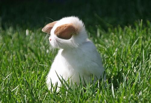 2008, 9-27 Daily Bunny.2