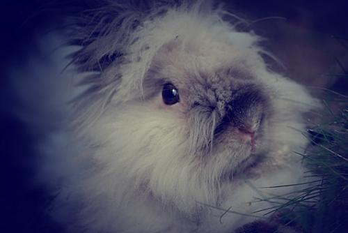 2008, 9-30 Daily Bunny