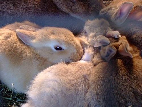 2008, 10-1 Daily Bunny.2