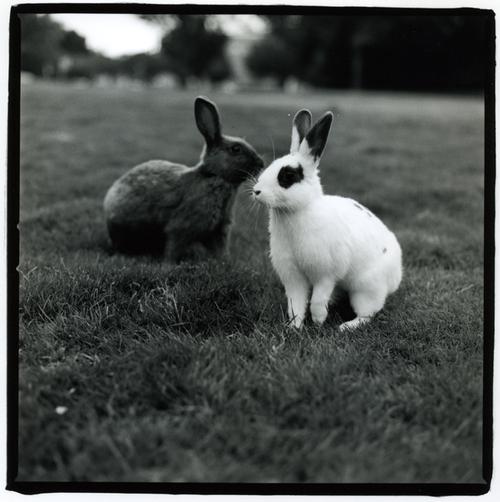 2008, 10-3 Daily Bunny.2