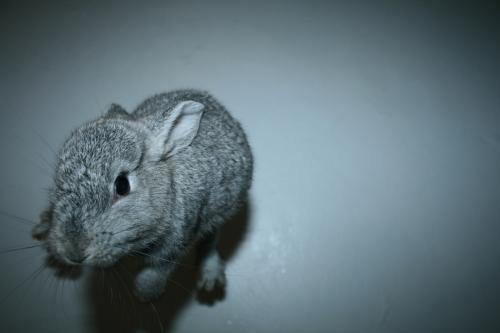 2008, 10-8 Daily Bunny