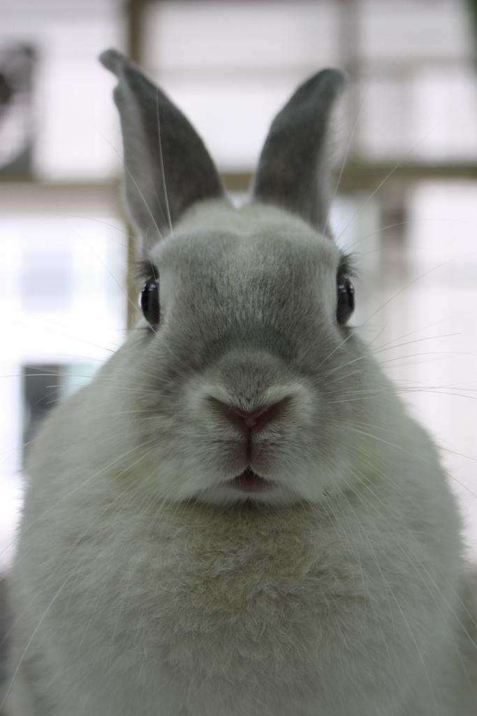 2008, 10-20 Daily Bunny
