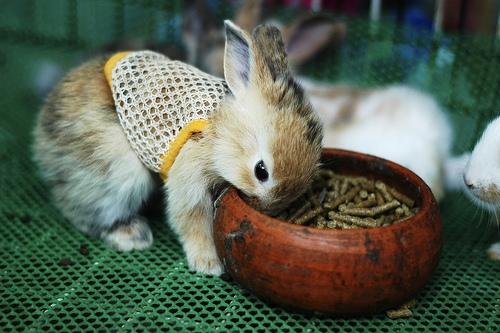 2008, 10-23 Daily Bunny