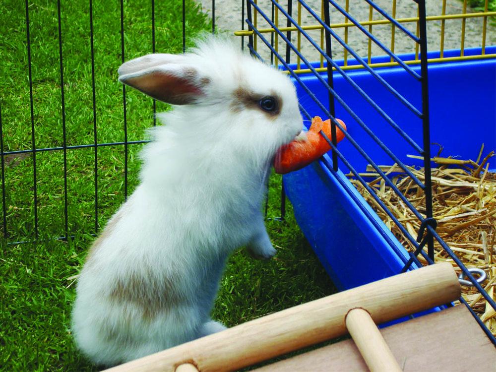 2008, 10-27 Daily Bunny