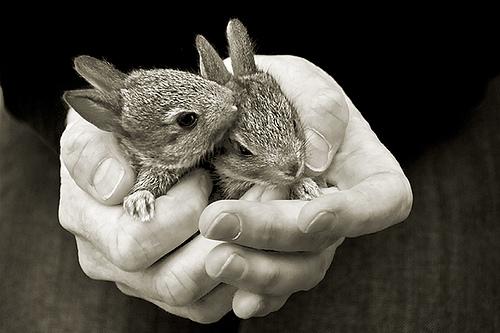 2008, 10-28 Daily Bunny