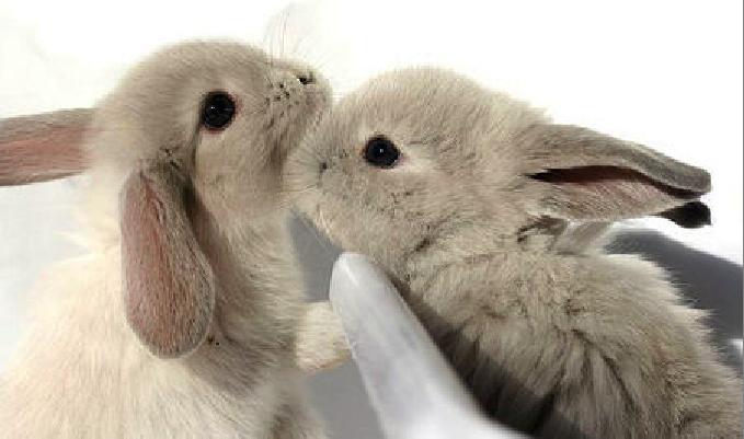 2008, 10-29 Daily Bunny