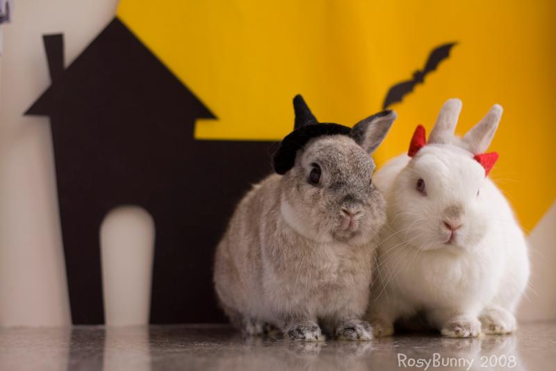 2008, 10-31 Daily Bunny
