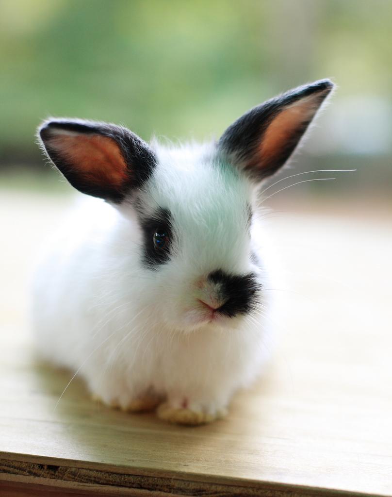 2008, 11-1 Daily Bunny