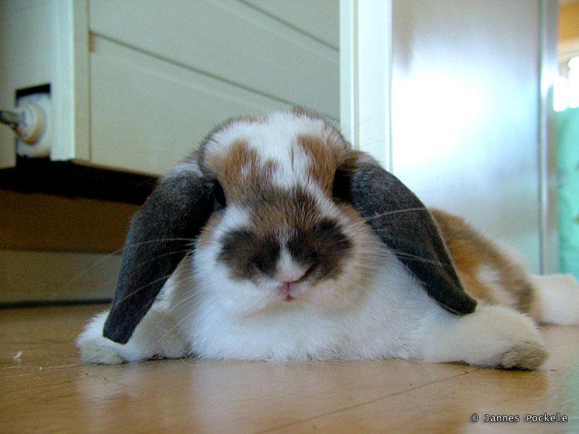 2008, 11-5 Daily Bunny