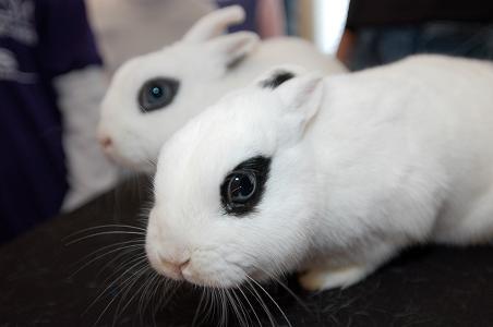 2008, 11-10 Daily Bunny