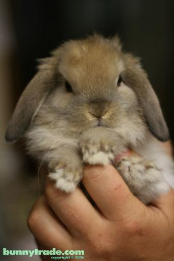 2008, 11-11 Daily Bunny