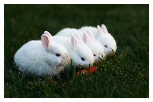 2008, 11-12 Daily Bunny