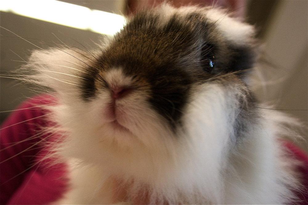 2008, 11-13 Daily Bunny