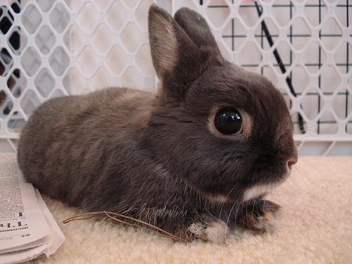 2008, 11-14 Daily Bunny