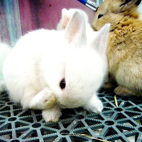2008, 11-15 Daily Bunny