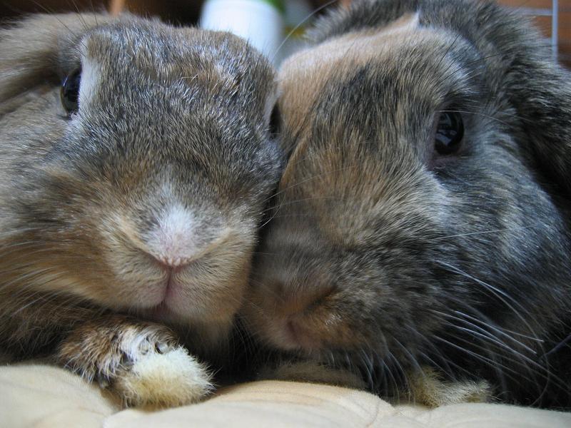 2008, 11-16 Daily Bunny