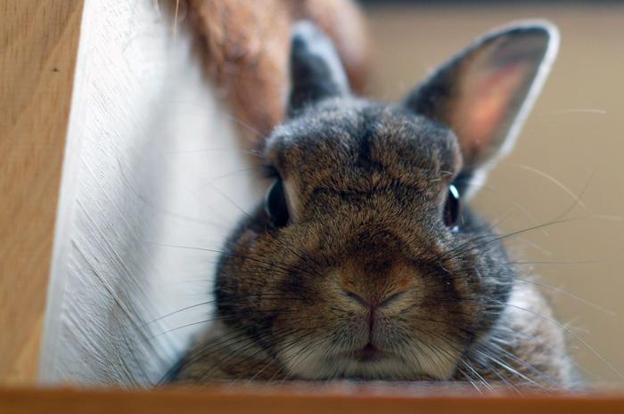 2008, 11-18 Daily Bunny