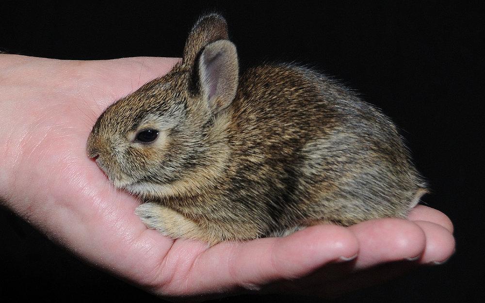 2008, 11-19 Daily Bunny