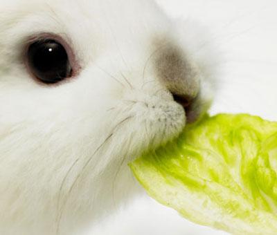 2008, 11-20 Daily Bunny