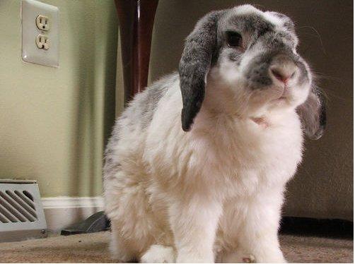 2008, 11-21 Daily Bunny