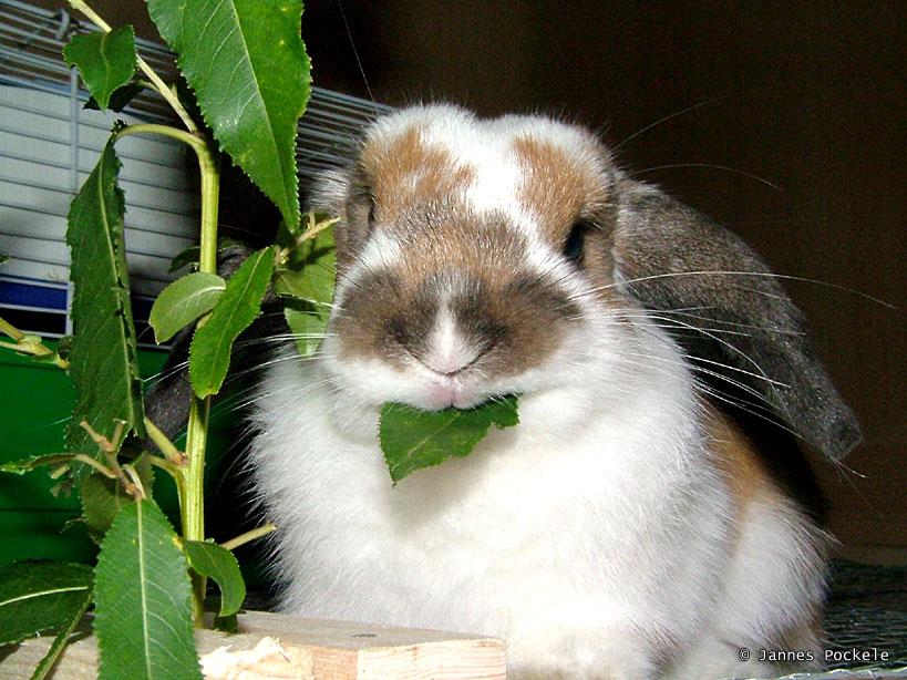 2008, 11-22 Daily Bunny