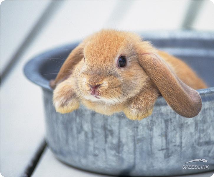 2008, 11-23 Daily Bunny