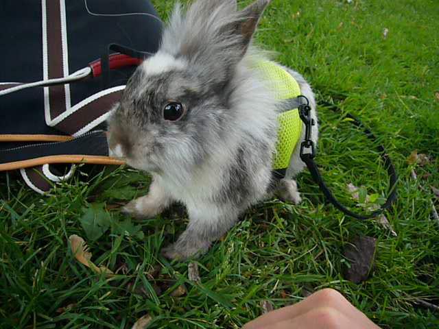 2008, 11-24 Daily Bunny