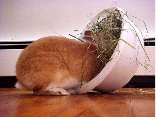 2008, 11-26 Daily Bunny