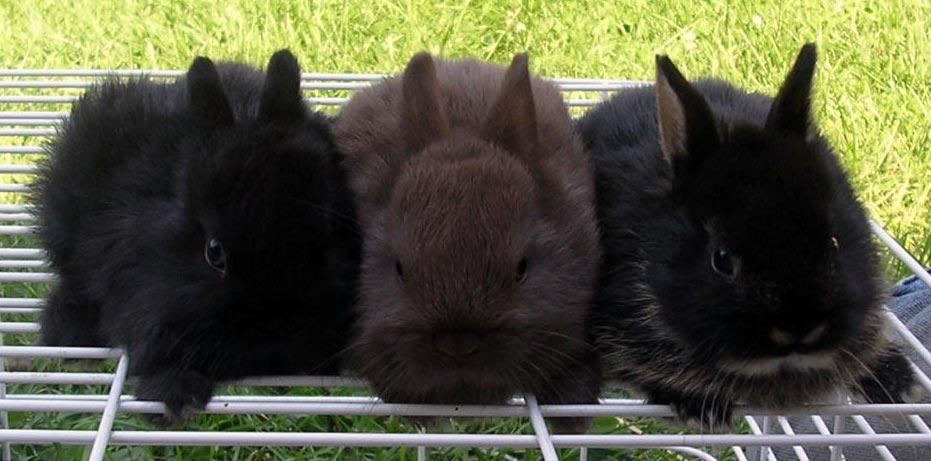 2008, 11-27 Daily Bunny