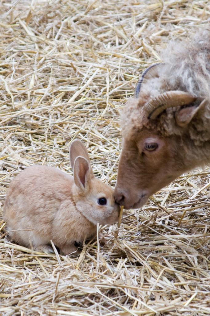 2008, 11-28 Daily Bunny