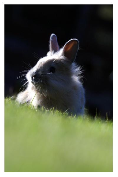 2008, 11-30 Daily Bunny