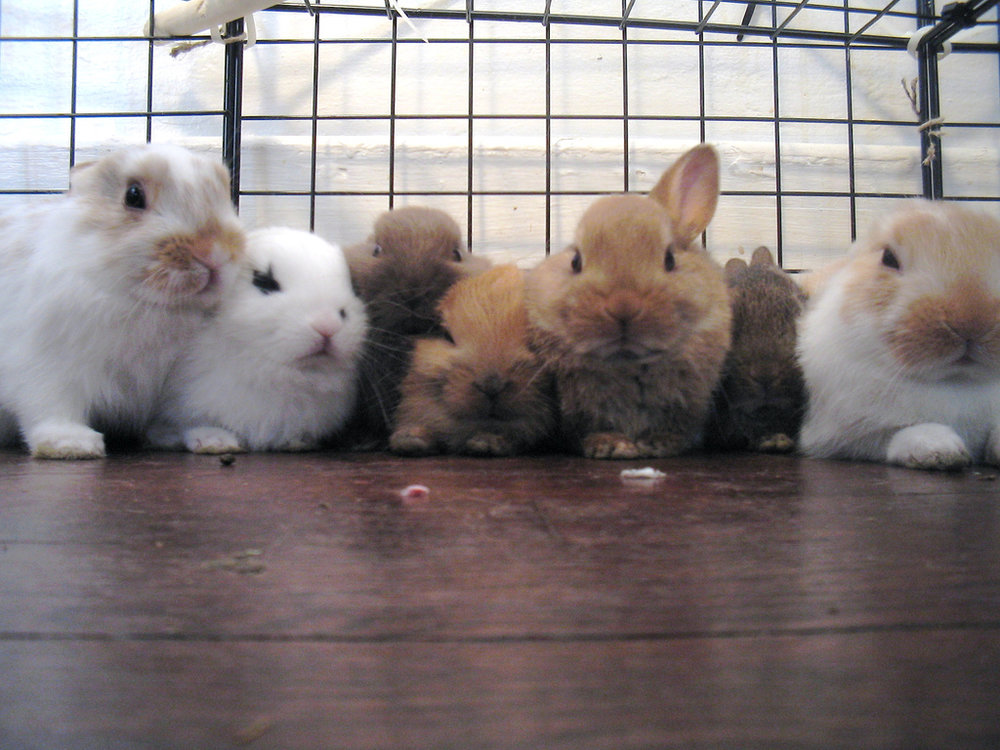 2008, 12-1 Daily Bunny