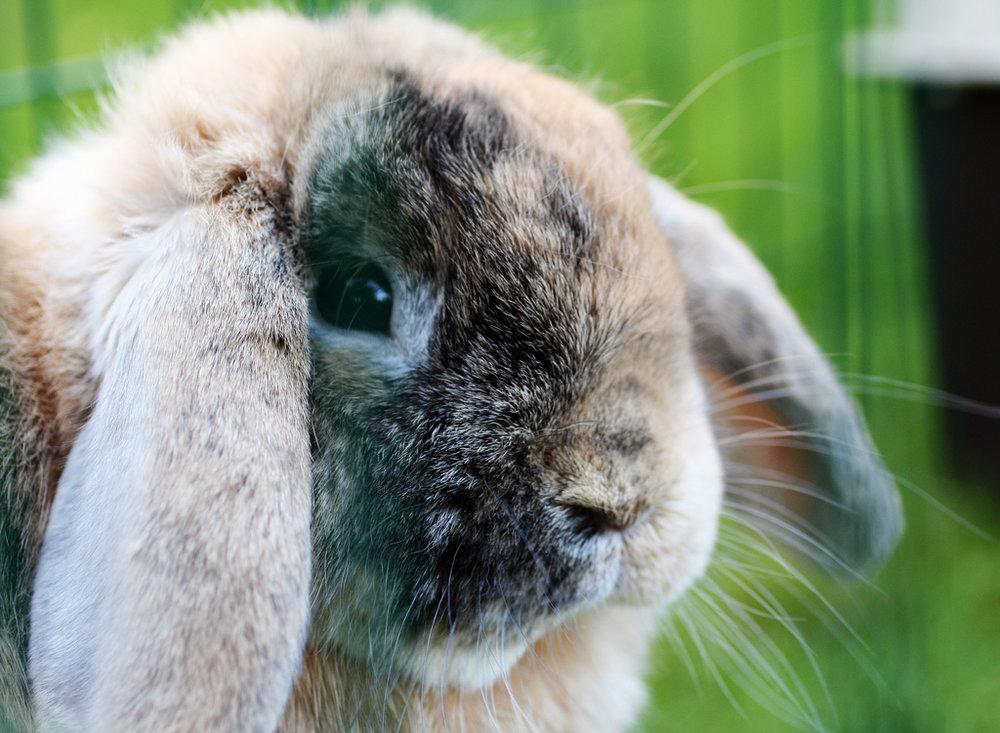 2008, 12-20 Daily Bunny