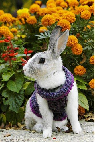 2008, 12-23 Daily Bunny