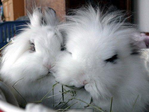 2008, 12-24 Daily Bunny