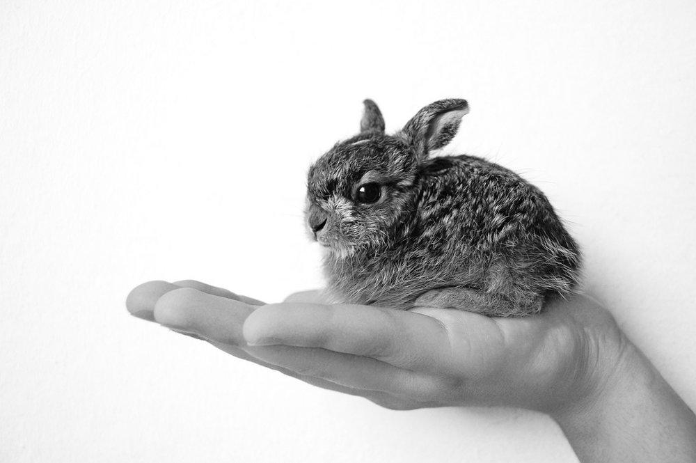 2008, 12-25 Daily Bunny